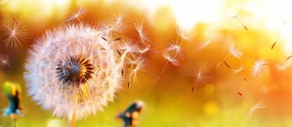 Allergia ai pollini, agli acari della polveri e al pelo di animali