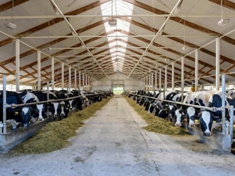 Ventilazione forzata in stalle ed allevamenti